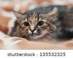 cat is hunting | Shutterstock . vector #135532325
