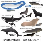 Collection Of Marine Mammals...