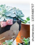 close up image of echeveria... | Shutterstock . vector #1355488757