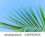 Leafs Of A Palm
