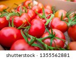 freshly picked red tomatos... | Shutterstock . vector #1355562881