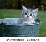 Kitten Peeking Out Of A Bucket