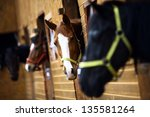 Stock photo color shot of some horses in a stable 135581264