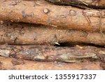 felled logs of wood | Shutterstock . vector #1355917337