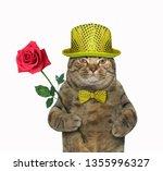 The Trendy Dressed Cat Is...