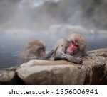 Adorable Japanese Snow Monkeys  ...