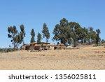landscape in tigray province ... | Shutterstock . vector #1356025811