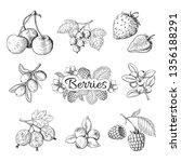 hand drawn berries. cherry... | Shutterstock .eps vector #1356188291