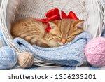 little striped kitten sleeps in ... | Shutterstock . vector #1356233201