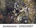 Mushrooms On Rotting Hemp....