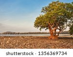 trees on a stones beach in the... | Shutterstock . vector #1356369734