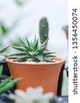 close up image of haworthia... | Shutterstock . vector #1356450074