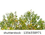 colourful leaves of tree... | Shutterstock . vector #1356558971