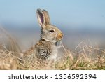 Stock photo rabbit hare while in grass in summer time 1356592394