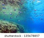 beautiful underwater view with... | Shutterstock . vector #135678857