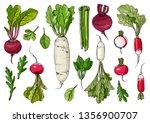 Daikon Radish Celery  Arugula ...