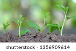 growth up level step. | Shutterstock . vector #1356909614