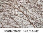 Vine on the wall pattern, grey colour - stock photo