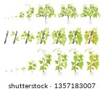 growth stages of grape plant.... | Shutterstock .eps vector #1357183007