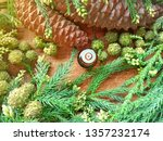 wood scents fir pine or spruce...   Shutterstock . vector #1357232174