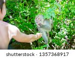 Children  Feeding Monkey On A...