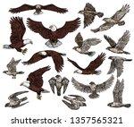 Predatory Birds Of Prey Vector...