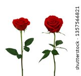Stock photo red rose flowers isolated on white background 1357566821