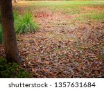dry leaf on ground.  natural... | Shutterstock . vector #1357631684