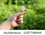 child's hand holding small... | Shutterstock . vector #1357748444