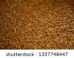 many living mealworm larvae... | Shutterstock . vector #1357748447