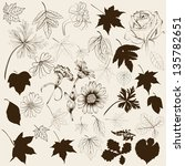 set of vector flowers and leafs ... | Shutterstock .eps vector #135782651