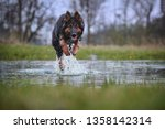 dog in splashing water  jumping ... | Shutterstock . vector #1358142314