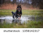 happy  hairy dog in splashing... | Shutterstock . vector #1358142317