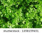 parsley  green parsley leaves... | Shutterstock . vector #1358159651