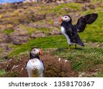 avian story about flying over... | Shutterstock . vector #1358170367