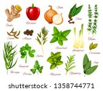 spices  herbs and vegetable... | Shutterstock .eps vector #1358744771