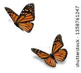 Beautiful Two Orange Monarch...