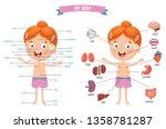 vector illustration of human... | Shutterstock .eps vector #1358781287