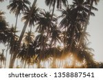 palm grove  palm trees against... | Shutterstock . vector #1358887541