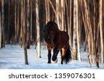 brown draft horse runs in... | Shutterstock . vector #1359076301