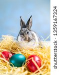 Stock photo easter bunny rabbit on the white blue background easter holiday concept cute rabbit in hay near 1359167324