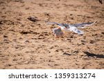 Seagull Flying Over The Sand A...