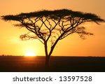 Silhouette Of Acacia In Sunris...