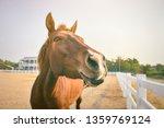 horse snouts happy. beautiful...   Shutterstock . vector #1359769124