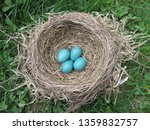 Four Beautiful Blue Robins Eggs ...