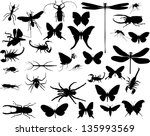Illustration With Insect...