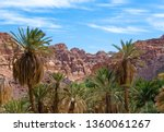 oasis with palm trees in the... | Shutterstock . vector #1360061267