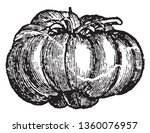 this is a tomato. tomato is... | Shutterstock .eps vector #1360076957