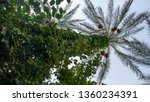 palm tree entwined with plants | Shutterstock . vector #1360234391
