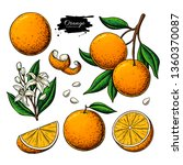 orange fruit vector drawing.... | Shutterstock .eps vector #1360370087